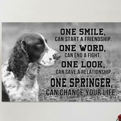 A collection of the funniest Springer Spaniel memes of all time. Check out this collection of funny Springer Spaniel pictures that surely leave you on the floor laughing! Springer Spaniel Puppies, English Springer Spaniel, Cocker Spaniel, Corgi Puppies, Spaniel Breeds, Dog Breeds, Dog Grooming Business, Black Lab Puppies, Dog Memes