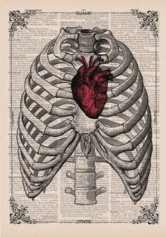 Red Anatomical Heart In Ribs Anatomical Illustration by EraPrints, $9.00