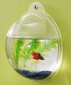 from pet gadgets. need for Wes' room