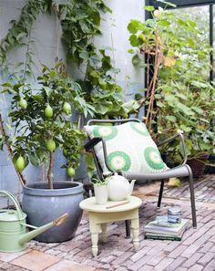 Je tuinhuis inrichten als oranjerie. Voor de leukste tuinhuisjes via @fonteyn