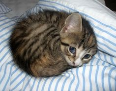 Cute Cat curled Up in bed http://ift.tt/2fh0LBM
