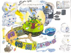 rock cycle climate weather water cycle carbon cycle nitrogen cycle
