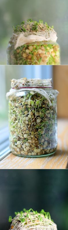 Here is something awesome you can do - plant a jar of lentil sprouts on your windowsill :)