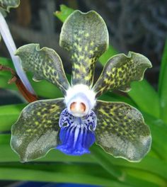 """Orchid """"Black and Blue"""". WOW!!!!"""