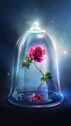 Rose in the glass bell jar from Beauty and the Beast - . -Enchanted Rose in the glass bell jar from Beauty and the Beast - . Enchanted Rose, Disney Enchanted, Glass Bell Jar, The Bell Jar, Cute Wallpaper Backgrounds, Pretty Wallpapers, Trendy Wallpaper, Rose Wallpaper, Tumblr Wallpaper