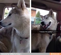 Hehe what a fantastic dog