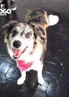 Husky, Dogs, Animals, Animales, Animaux, Pet Dogs, Doggies, Animal, Animais