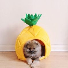 A fancy pineapple bed for your pet.