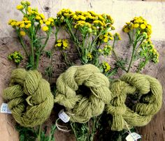 Beautiful soft green yarn obtained from dyeing with what looks like tansy.