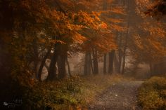 """""""Secret Path"""" by ildikoneer (Flickr)"""