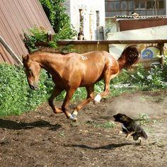 "Instagram media by suneri25 - ""Из воспоминаний"" Базудин и Жучка) #azov#horses#лошадь#азов#атака#игра#круто#момент#буденовец #буденовскаяпорода"