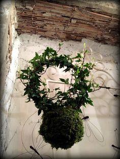 kokedama & co.: #ivy
