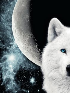 Wolf And Moon By Shadow Of Nemo On Deviantart