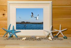 seagull photo ocean life