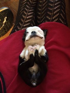 """Is this how puppies are supposed to nap? I think I'm doing it!"" 
