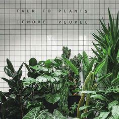 Lush plants against white tile? We're here for it! Plants in focus via @plantsinfocus