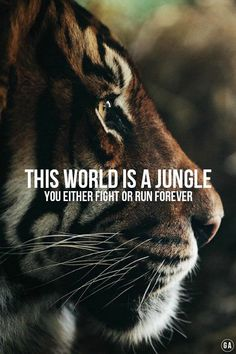the world is a jungle.                                                                                                                                                                                 More