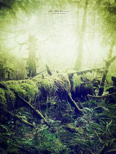 ancient woods | Flickr - Photo Sharing!