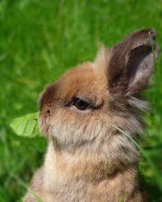 rabbit królik króliczek miniaturka bunny by izabelacop, via Flickr
