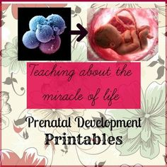 Prenatal Development Teaching Resource includes:  - 10 large timeline cards with fetal development stages  - 10 3-Part Montessori cards with short prenatal development stages and short description for every stage.  - Printable for children to reflect on their learning - cut out and stick on in the right order pictures of fetal development.
