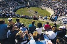 Combat de reines, Martigny Dolores Park, Travel, Cows, Queen, Viajes, Trips, Traveling, Tourism, Vacations
