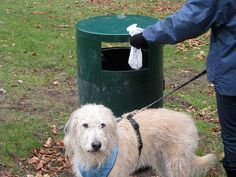 Citizen Science project that tracks dog poop!? Learn why dog poop isn't just a nuisance, it's a problem for conservation and water quality.