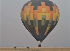 Where else but the Hot air ballooning is offered at & from Aug - Oct. It's an unmissable game-viewing experience, soaring over vast floodplains teeming with hippo, lechwe, puku and so much more. Wilderness, Safari, Hot, Wildlife Nature