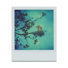 ❤ liked on Polyvore featuring polaroid, backgrounds, pictures, photos, fillers, quotes, text, phrase, magazine and borders