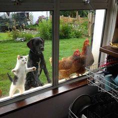 家の中を覗く動物たち