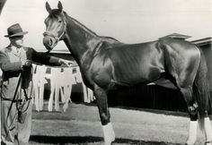 Citation as a lean racing machine.  Listed #3 of the 100 Greatest Racehorses of the 20th Century, behind only Man o' War & Secretariat, but he won far more races than either.