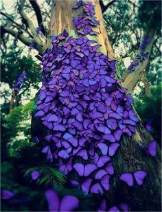 ❥ purple butterfly