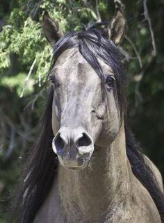 Quarter Horse. I so long to go horse riding again...as a child horses made me feel so safe.