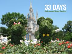 """33 Days until our next Disney Vacation!  We are counting the days to our next Disney trip with our favorite pics taken at the parks. This photo is of a Mickey and Minnie topiary located in front of the Cinderella Castle at The magic Kingdom. Let us know if you """"Like""""."""