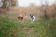 Dogs running - Hunde rennen