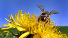 Afbeeldingsresultaat voor spring is in the air Bee Happy, National Geographic, Favorite Color, Bugs, Plants, Animals, Image, Kaffe, Info