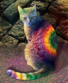 i love painted cats  .