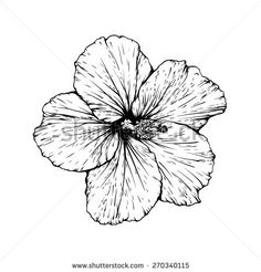 Hibiscus flower vector graphic illustration. Black image isolated on white background