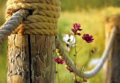 post & rope with wild flowers