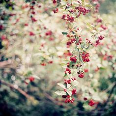 flowers red & tiny
