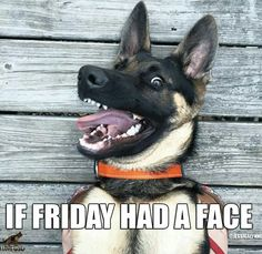 319 Best friday dogs images | Friday dog, Dogs, Its friday quotes