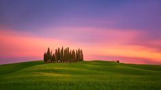 Just Tuscany - A group of cypresses on the rolling hills of Tuscany, Italy
