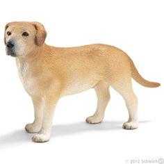 Labrador, male - N