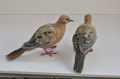 Needle Felted Bird . Mourning dove. Life size by darialvovsky