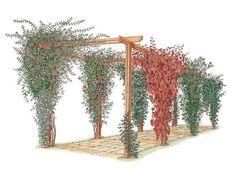 Gardening Diy Learn how to choose and maintain climbing plants for arches and pergolas with this gardening guide from DIY Network. - There are a number of reasons, both aesthetic and practical, for growing plants on vertical structures.