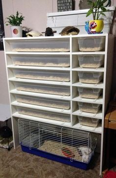 Ball Python Rack System For Sale.For Sale Boaphile RhinoRaxx 1960 Plastic Reptile Cages Tanks And Racks Snake Arboreal . Reptile Products You Can Trust Reptile Basics Inc. Home and Family Terrariums Diy, Terrarium Reptile, Frog Terrarium, Tortoise As Pets, Baby Tortoise, Tortoise Cage, Reptile Room, Reptile Cage, Animal Room