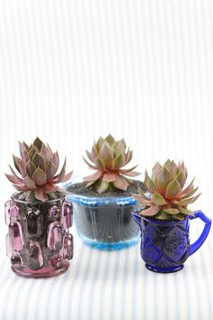 Learn how to make DIY wedding succulents in vintage glassware. You can use these as wedding favors - or use them as centerpieces.