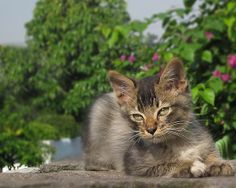Jeremy   cat