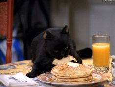 Pancakes are the best food. Therefore Pancake Day is the best day. Salem Sabrina, Sabrina Cat, Funny Cat Videos, Funny Memes, Funny Gifs, Salem Cat, Salem Saberhagen, Funny Cute, Hilarious