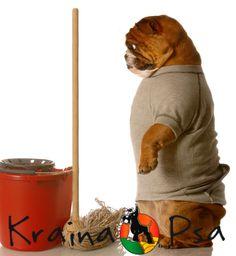 Does your Dog clean the floor? :) :)  http://www.krainapsa.pl