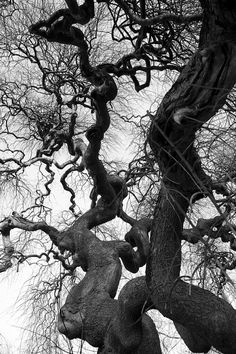 I have always loved black and white photographs of trees. tortuoso - Jorge Losada